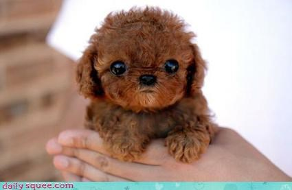 cute puppy surreal - 4085363456