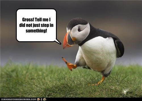 caption,captioned,exclamation,gross,grossed out,icky,mistake,puffin,something,step,walking