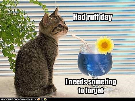 alcohol caption captioned cat forgetting having kitten need rough day something - 4085568256