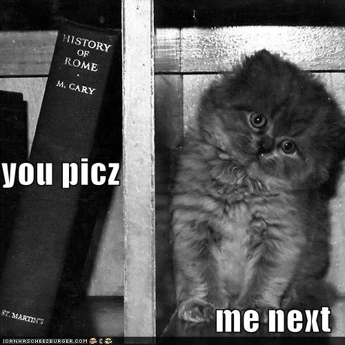 books bookshelf caption captioned cat cute kitten me next options pick queue reading waiting - 4085805312