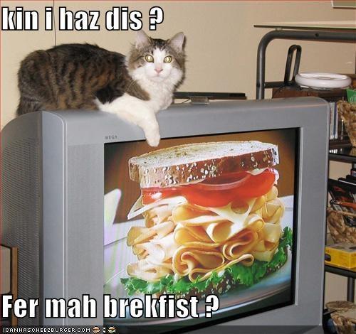 Cheezburger Image 4086815744