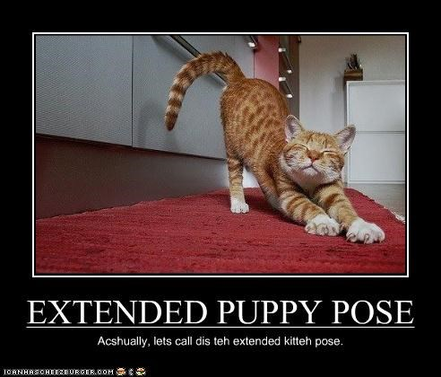 EXTENDED PUPPY POSE Acshually, lets call dis teh extended kitteh pose.