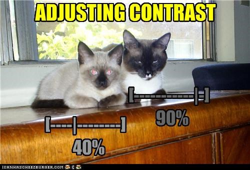 40 90 adjusting caption captioned cat Cats contrast