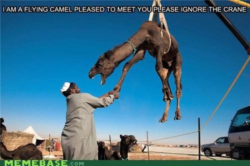 camel classic crane Memes silly thing - 4088845824