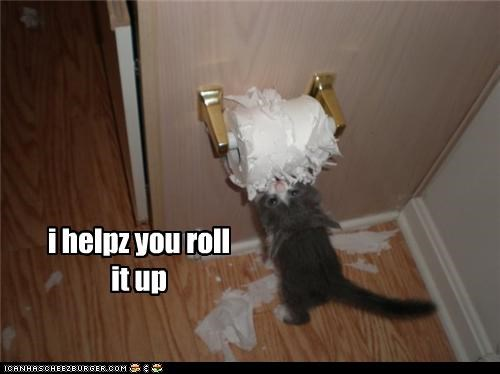 caption captioned cat excuse justification kitten mess mischief roll shredding toilet paper - 4089064448