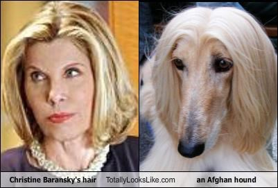 actress,Afghan Hound,Christine Baranski,dogs,hair