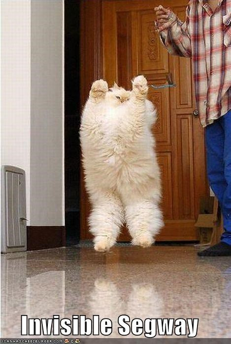 caption captioned cat Fluffy invisible riding segway - 4089361664