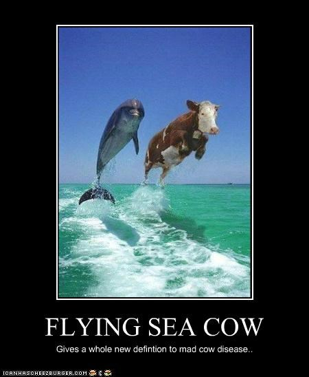 Flying Sea Cow Cheezburger Funny Memes Funny Pictures