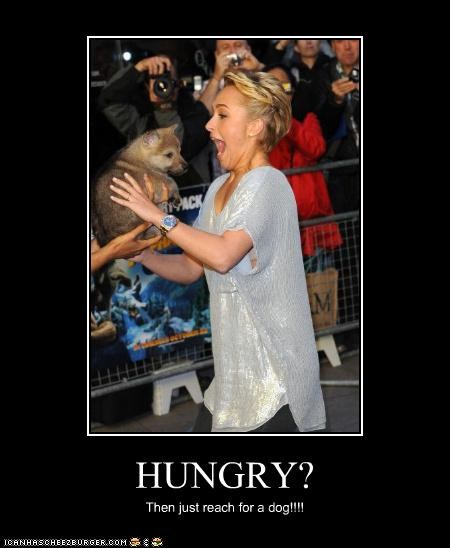 HUNGRY? Then just reach for a dog!!!!