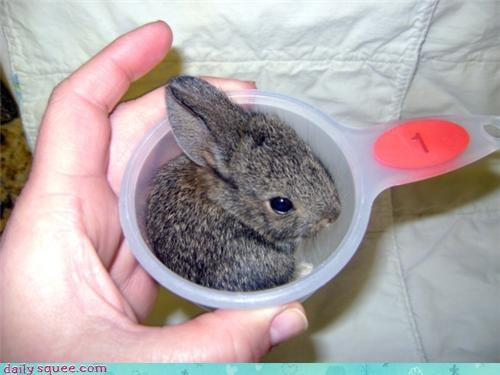 baby,bunny,happy bunday,measuring cup,rabbit,squee