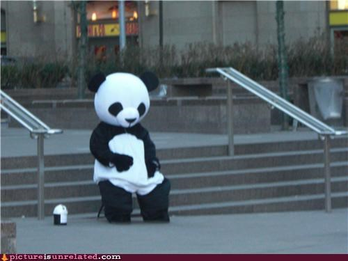 begging,costume,money,pan handling,panda,poor,puns,wtf