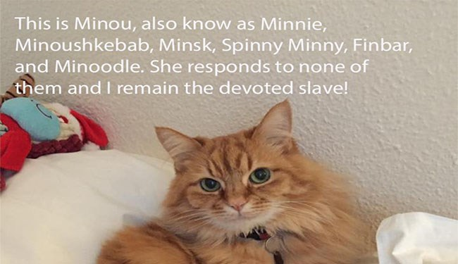 a funny list of cats nicknames