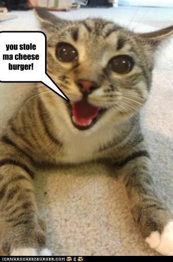 Cheezburger Image 4092235776