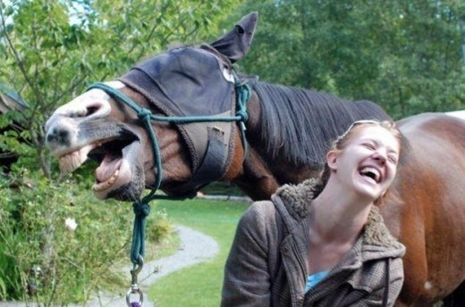horses photobombs