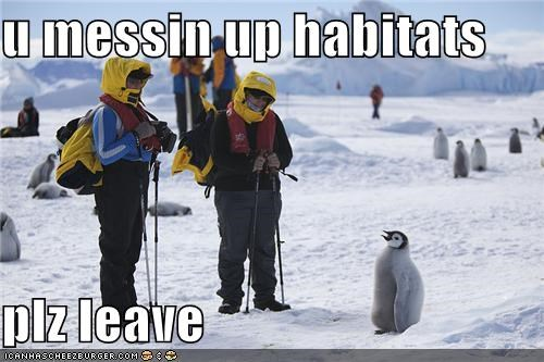 appeal begging caption captioned habitats leave messing up penguin please talking - 4092775168
