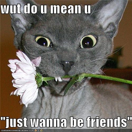 be friends,caption,captioned,cat,confused,Flower,just friends,question,sphynx,wanna,what do you mean