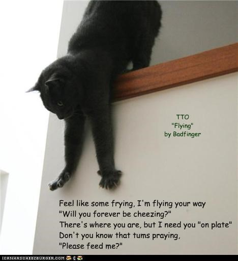 "Feel like some frying, I'm flying your way ""Will you forever be cheezing?"" There's where you are, but I need you ""on plate"" Don't you know that tums praying, ""Please feed me?"" TTO ""Flying"" by Badfinger"