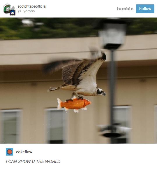 funny animal posts on Tumblr