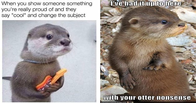 "otters memes funny cute aww animals baby animals adorable humor meme sea mammals | had up here with otter nonsense ICANHASCHEEZBURGER.COM | show someone something really proud and they say ""cool"" and change subject"