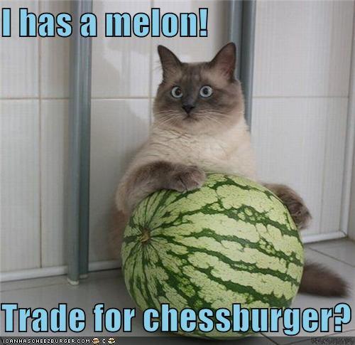 Cheezburger Image 4094192640