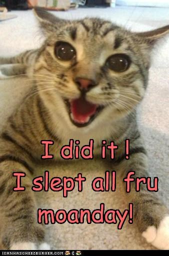 accomplishment caption captioned cat excited feat finished i did it monday proud slept - 4094343680