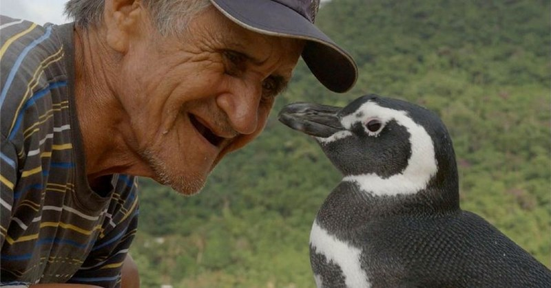 brazil heartwarming old man pinguin lost - 4094469