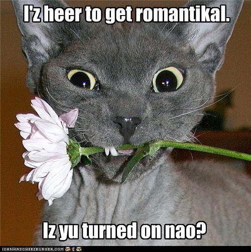 I'z heer to get romantikal. Iz yu turned on nao?