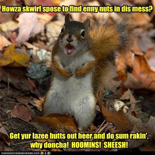 IN CASE YOUSE HADDENT NOTICED, WINTER'S COMIN! Howza skwirl spose to find enny nuts in dis mess? Get yur lazee butts out heer and do sum rakin', why doncha! HOOMINS! SHEESH!