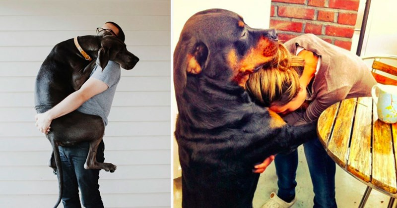 Photos of dogs hugging their humans