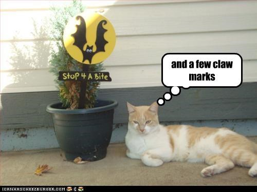 caption captioned cat claw marks gift halloween meowloween treats trick or treat - 4095316992