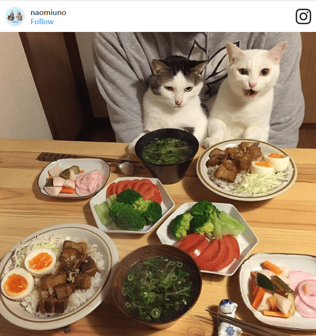 funny cat faces when staring at food