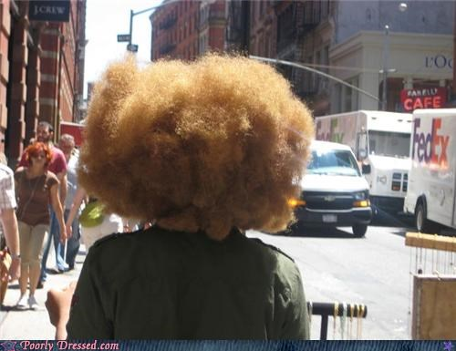 bird nest fro hair wtf - 4097201920