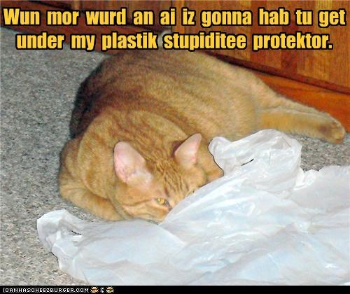 bag,caption,captioned,cat,device,one more word,plastic bag,protector,stupidity,tabby,threat