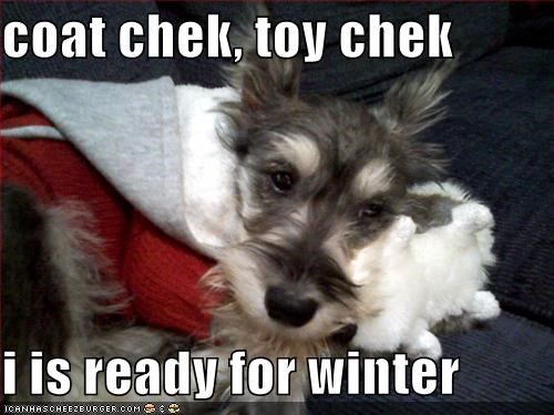 coat cuddling prepared ready snuggling terrier toy whatbreed winter - 4097812224