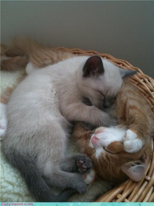 kitten sleep user pets - 4097813248