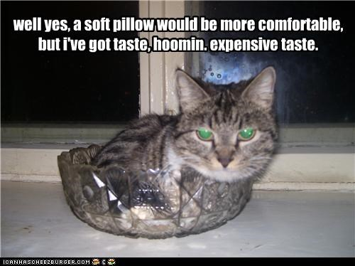 caption,captioned,cat,class,comfort,expensive,explanation,glassware,Pillow,soft,style,tabby,taste,tray