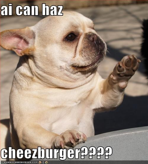 Cheezburger Image 4098330624