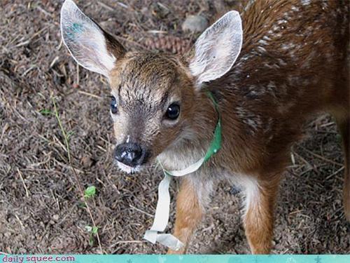 cute deer hair - 4098711296