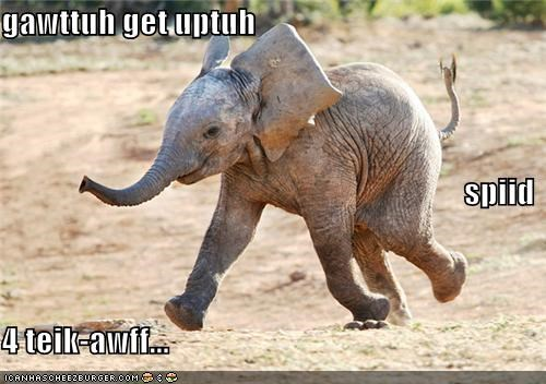 caption captioned elephant flying hover liftoff need running speed trying - 4099343616