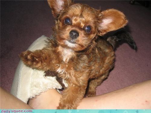 puppy user pets - 4100369408