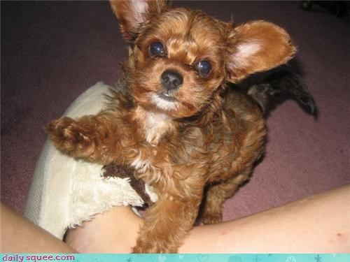 dogs puppy user pets - 4100369408