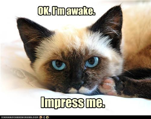 awake caption captioned cat i am impress impress me me Okay