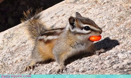 cute,ground squirrel,noms,Om Nom Monday