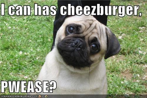 Cheezburger Image 4101889024