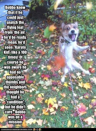 "Bobbo knew that if he could just snatch the flying leaf from the air, he'd be ready. I mean, he'd seen ""Karate Kid"" like a 100 times! Of course he was aware he had no opposable thumbs and the neighbors thought he had a ""condition"", but he didn't care - Bobbo was on a mission"