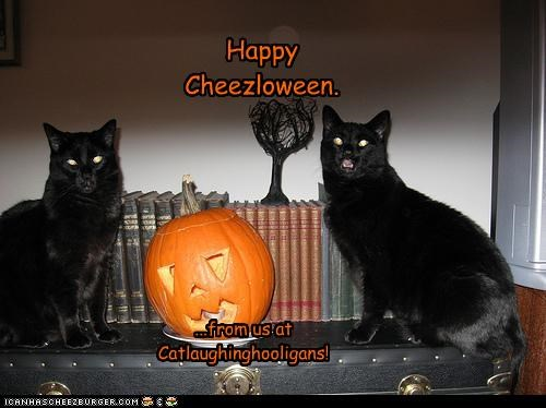Happy Cheezloween. ...from us at Catlaughinghooligans!