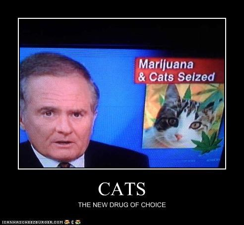 CATS THE NEW DRUG OF CHOICE