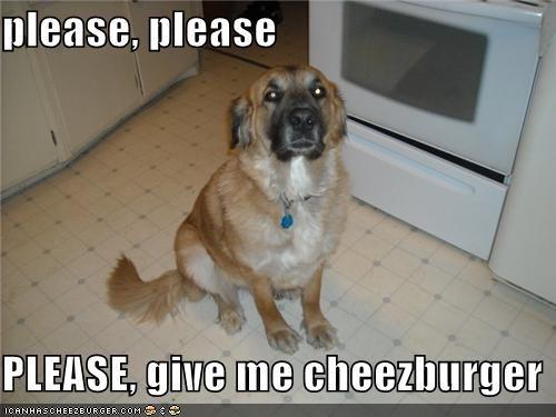Cheezburger Image 4102891264