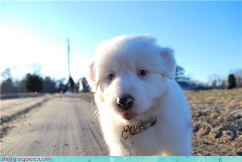 Delia puppy user pets
