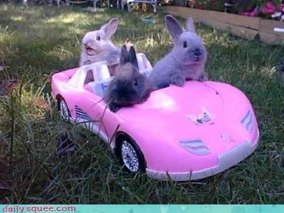 bunny rabit - 4103806976